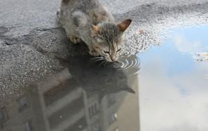 kot wolno żyjący